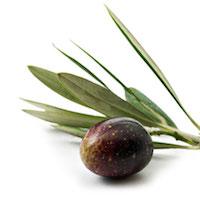 olive-nere